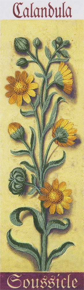 Embroidery kits PANNA Living Picture JK-2120 Botany. Common Marigold
