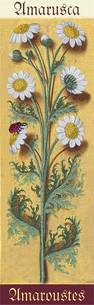 Embroidery kits PANNA Living Picture JK-2119 Botany. Chamomile